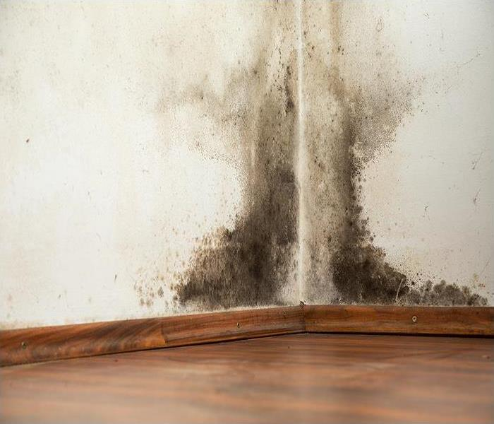 Mold Remediation Common Places to Find Mold