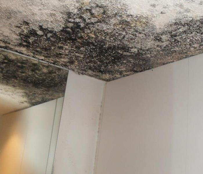 Mold Remediation The Real Truth About Mold Removal And Mold Remediation